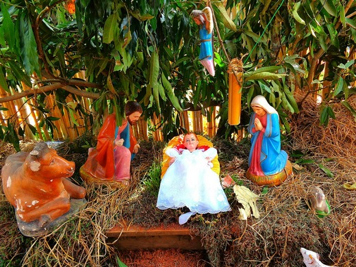 Christmas nativity with tropical plants