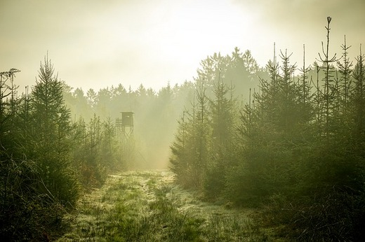 A scouting tower in a foggy forest.