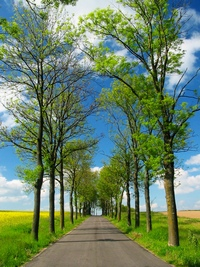 ../images/Tree-lined-road-200.jpg
