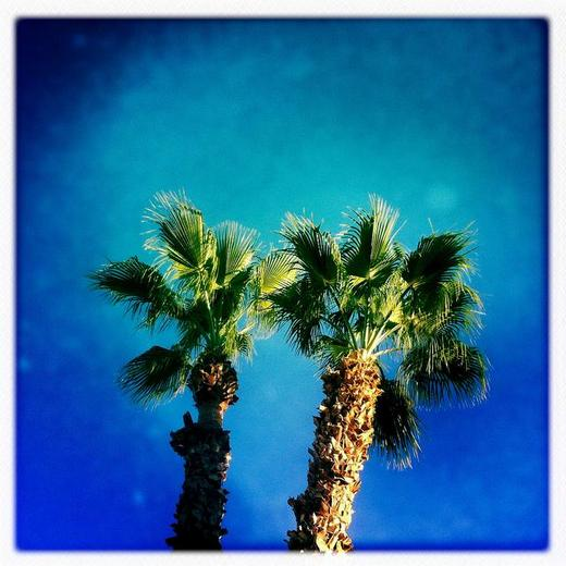../images/Tropical-palms-in-blue.jpg